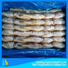 frozen cheap baby yellow croaker for sale wholesale price